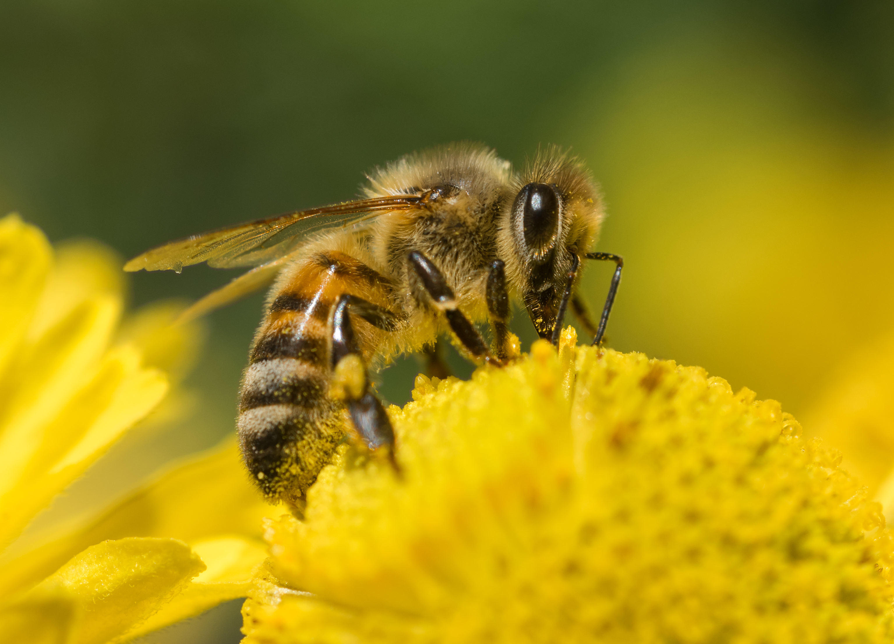 Do Bees and Alzheimer's Have A Direct Correlation?